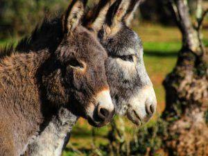 Visita y ayuda a los burros en el Refugio del Burrito en Fuente de Piedra