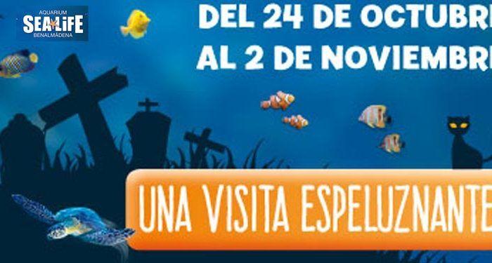 sealife hallowen 15