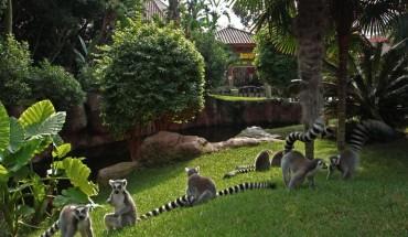 bioparc expo fotos instantes salvajes lemur cola anillada