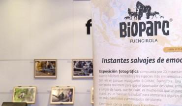 bioparc expo fotos instantes salvajes cartela