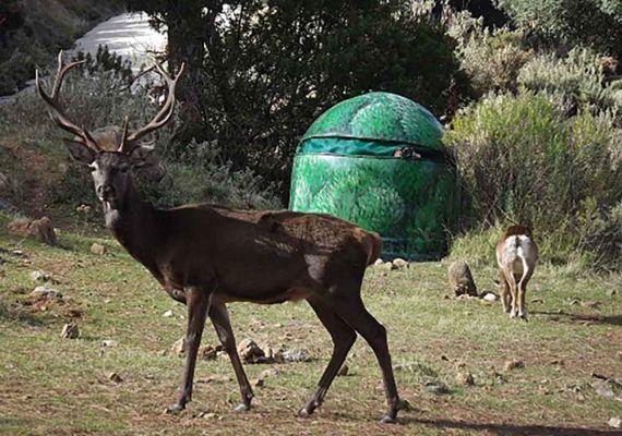 Excursión de naturaleza con niños: La Eco Reserva de Ojén (Málaga) con animales en libertad