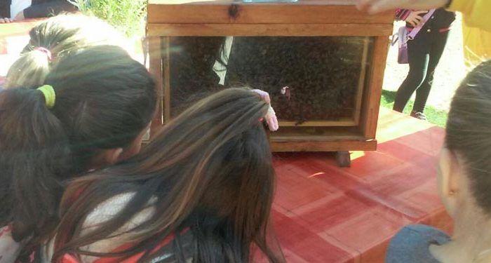 Taller de apicultura para niños en Málaga por el Día Mundial de la Abeja