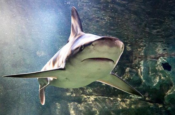 Semana del Tiburón en Sea Life Benalmádena