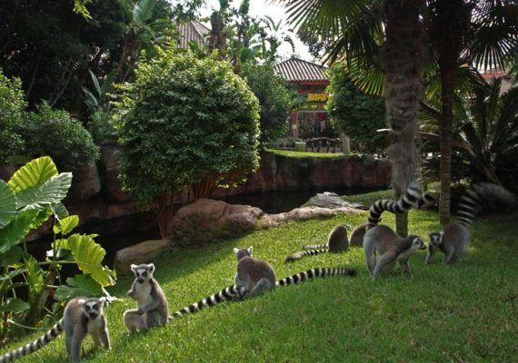 bioparc expo fotos instantes salvajes emocion lemur cola anillada