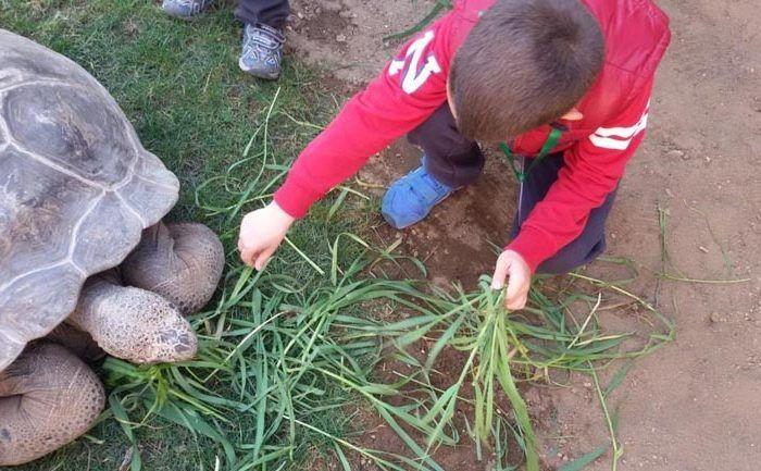 Campamento en junio en Bioparc Fuengirola