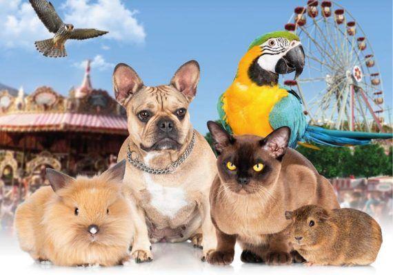 Día de la Mascota en Tivoli