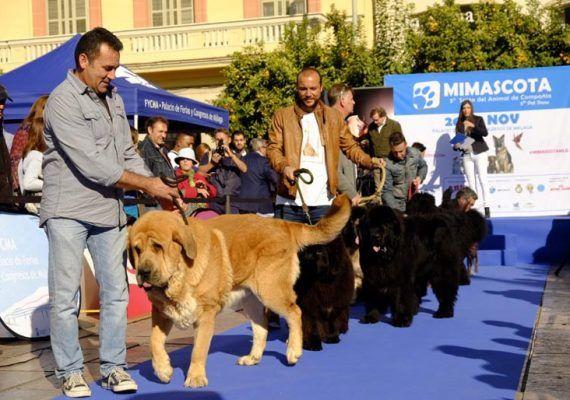 Feria Mi Mascota en el Palacio de Ferias Málaga
