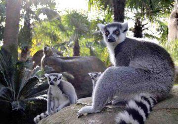 Los mejores parques zoológicos y naturales para visitar con niños en Málaga