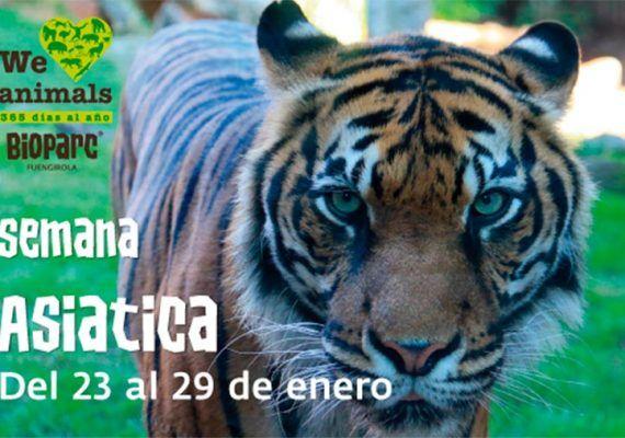 Bioparc Fuengirola semana asiática