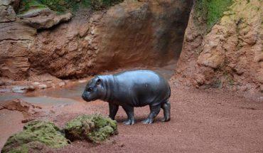 Bioparc Fuengirola zoo malaga
