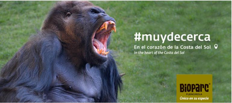 Gorila bioparc Fuengirola