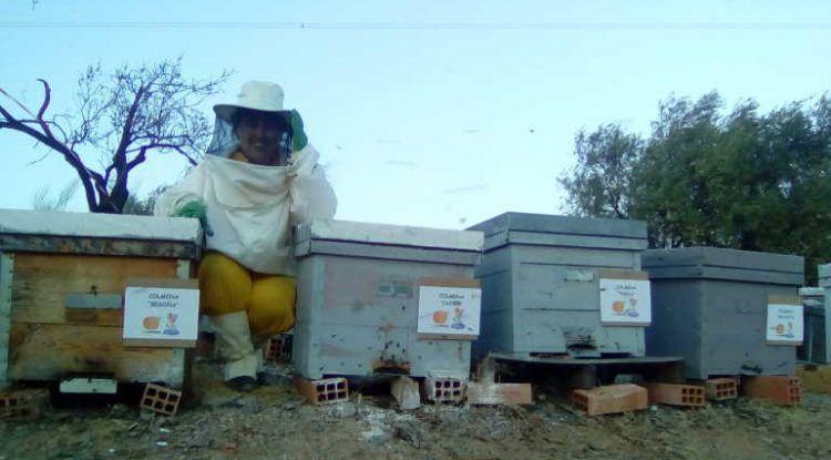 Aula Bee Garden