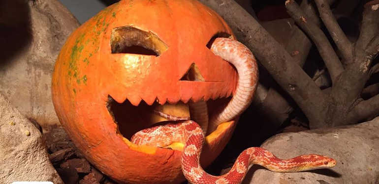selwo Halloween