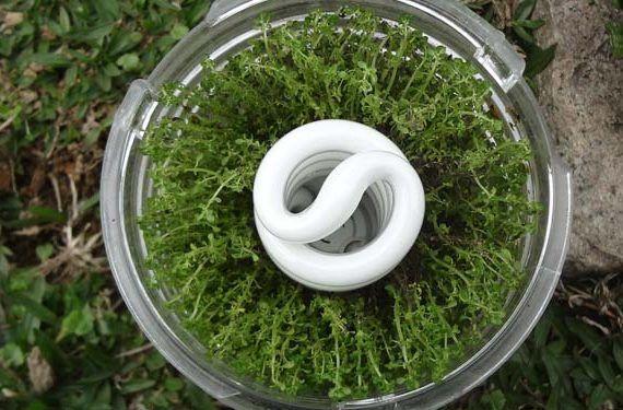 Bombilla y ahorro energético para cuidar el medioambiente