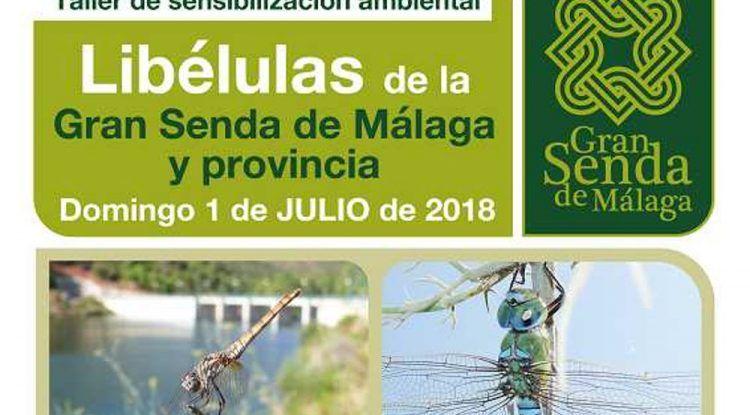 Taller gratuito sobre libélulas para toda la familia en Benahavís