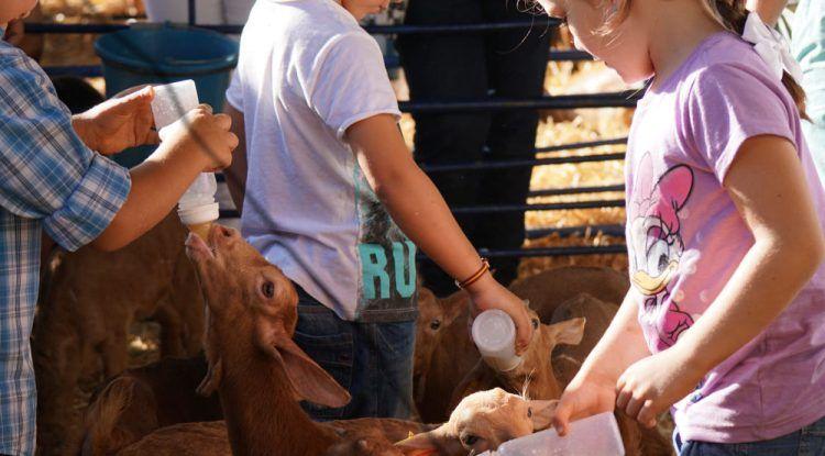 Actividades para niños en la XI Fiesta de la Cabra Malagueña en Casabermeja