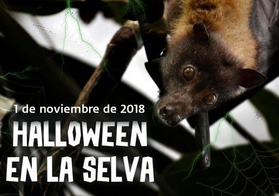 Pruebas y regalos para celebrar Halloween en la selva en Bioparc Fuengirola