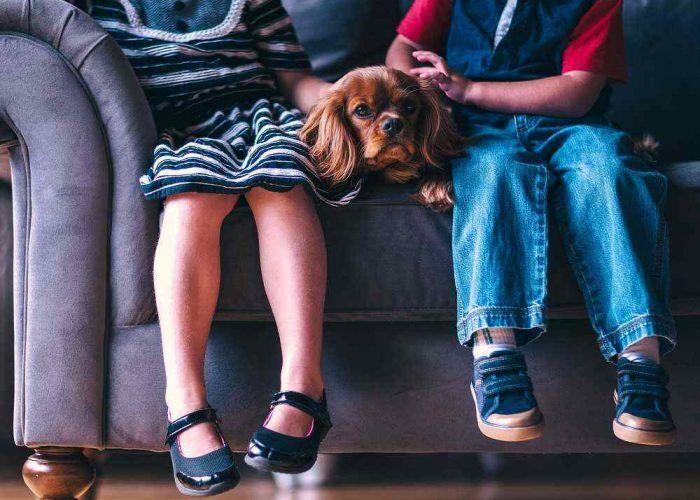 Beneficios de las mascotas para los niños: un nuevo amigo en casa