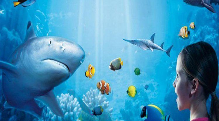 Celebra el cumple de tu peque rodeado de tiburones en Sea Life Benalmádena