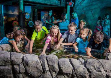 Visitas gratis para profesores en Sea Life Benalmádena este fin de semana