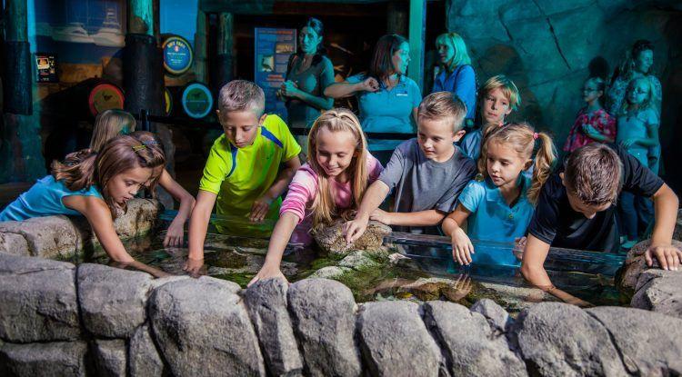 Visitas gratis para profesores en Sea Life Benalmádena