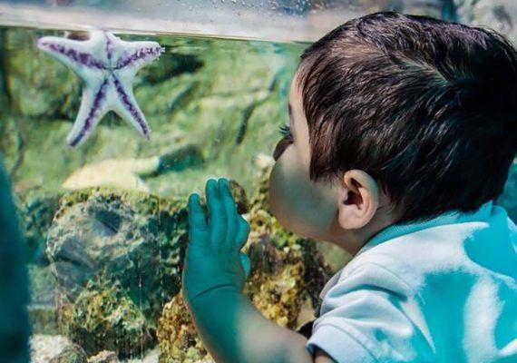 Visitas escolares en Sea Life Benalmádena para acercar a los niños al mundo marino