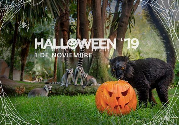 Celebra Halloween en familia con una gymkana en Bioparc Fuengirola