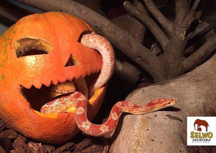 Halloween en Selwo Aventura, Selwo Marina y Teleférico de Benalmádena: entrada gratis para niños disfrazados