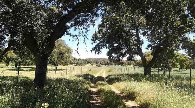Senderos de otoño: ruta de senderismo en familia por Cañete la Real - Arriate