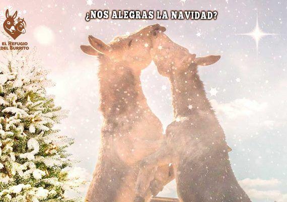Talleres gratis para toda la familia y Mercadillo de Navidad con El Refugio del Burrito en La Invisible (Málaga)