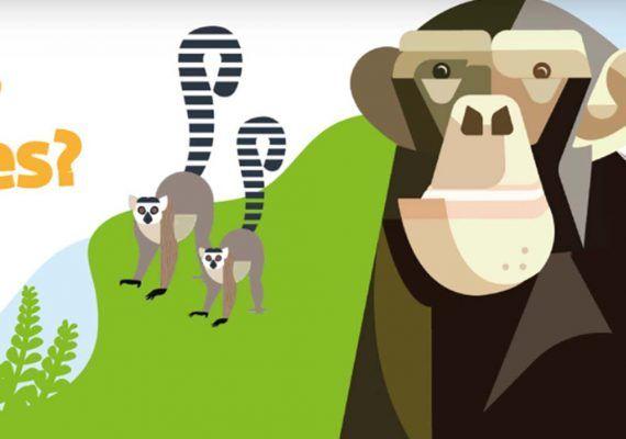 Actividades sobre animales online y gratis para niños con Bioparc Fuengirola