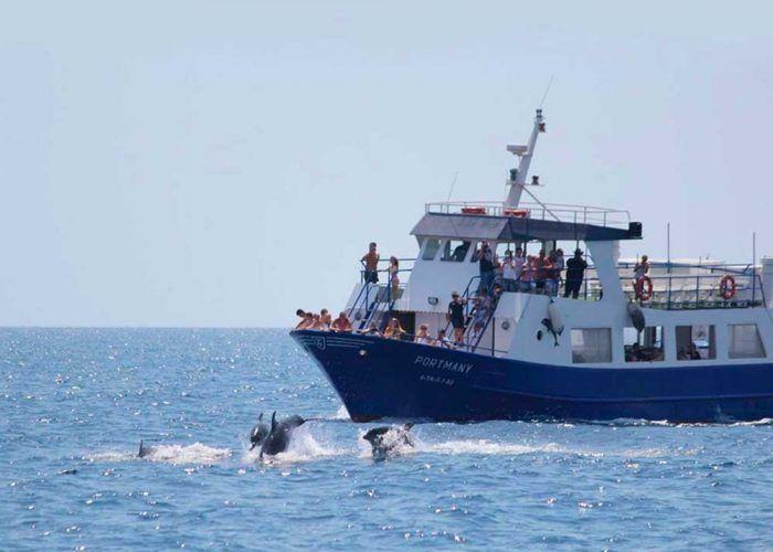 Ver delfines en libertad con niños: Alborán Explorer en Fuengirola