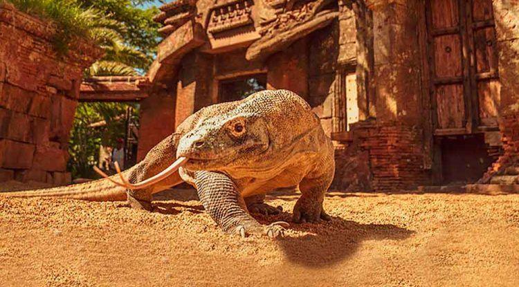 Animales salvajes en el centro de Fuengirola: Aventura en la selva con Bioparc
