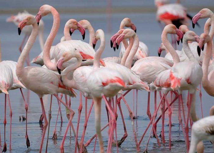 Excursión con niños en Málaga: la Reserva Natural Laguna de Fuente de Piedra