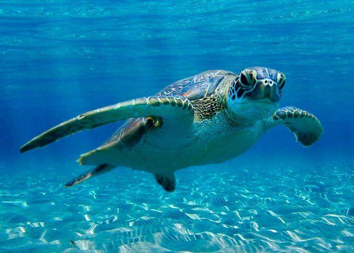 Ver animales marinos con niños: Sea Life de Benalmádena