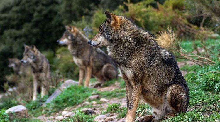 Lobo Park de Antequera: una experiencia inolvidable para toda la familia