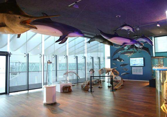 Museo Alboranía Aula del Mar: Visita en familia