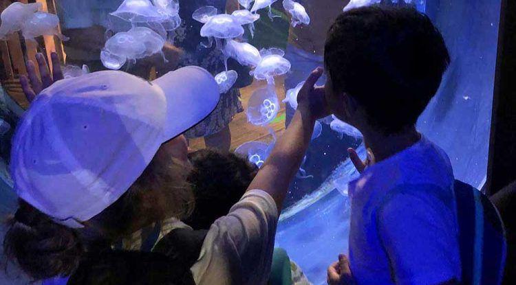 Campamento de verano para niños con diversidad funcional en ANENDO Málaga