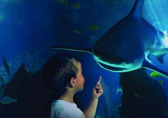 Sea Life Benalmádena reabre sus puertas con entrada gratis para niños y medidas de seguridad