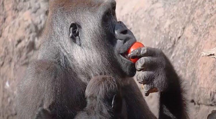 Qué comen los animales en Bioparc Fuengirola: menú personalizado