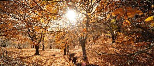 Senderismo en Málaga para toda la familia: Bosque del Cobre