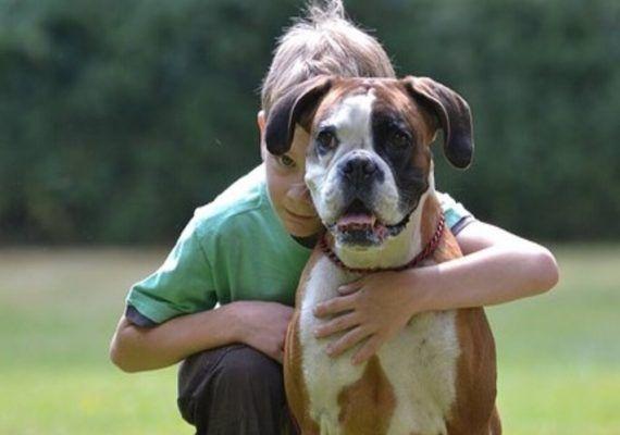 Inculcar el amor por los animales a tus hijos: ¿cómo hacerlo correctamente?